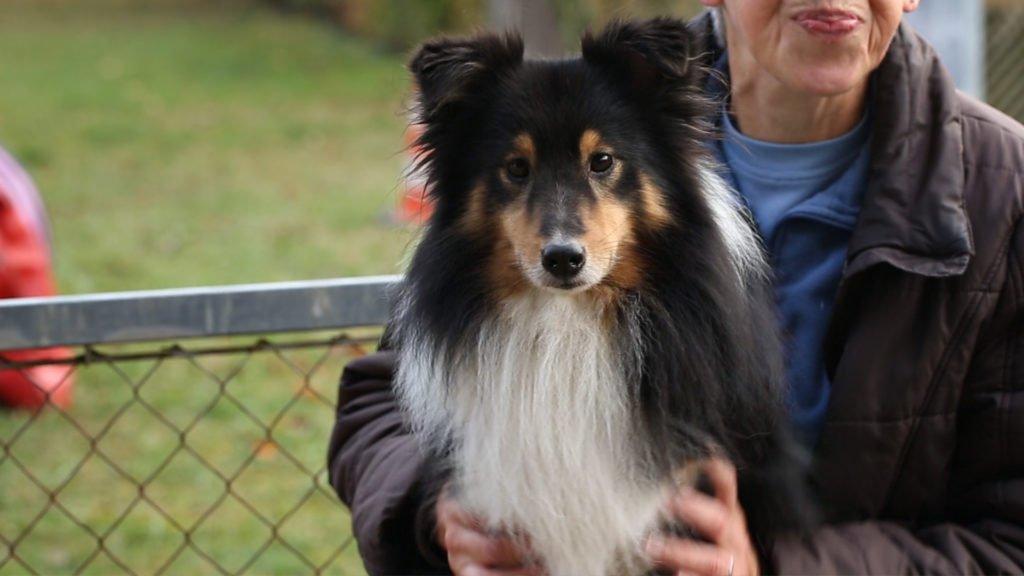 Agility au Club canin de Sarreguemines