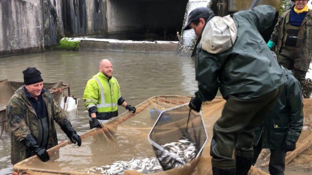 Les pêcheurs s'activent pour transférer les poissons de l'étang de Diefenbach