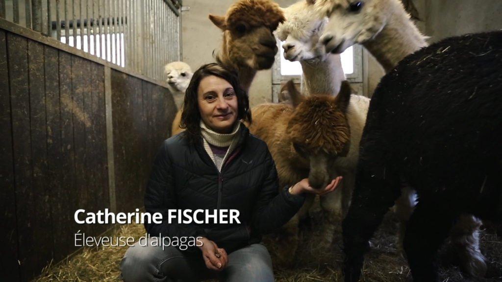 Catherine Fischer, éleveuse d'alpagas