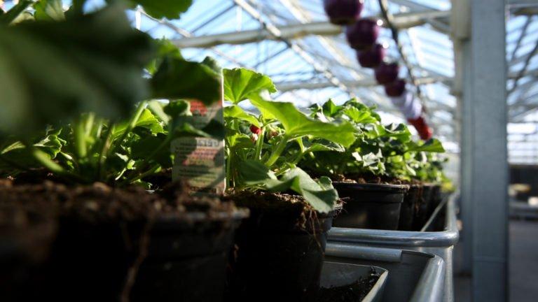 Fleurs Krebs : Horticulteurs de père en fils