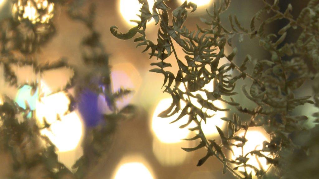 La Fougère aux origines du cristal