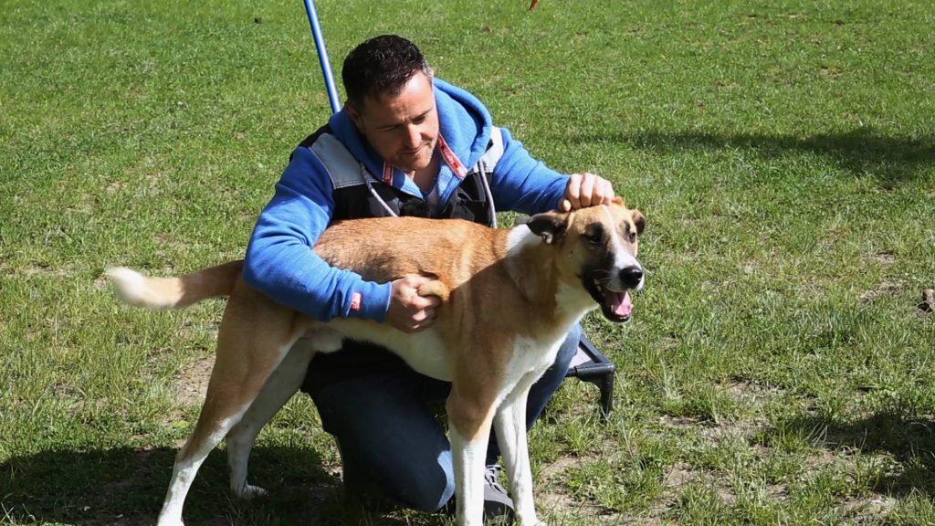 Mireille et Stéphane, éducateurs canins