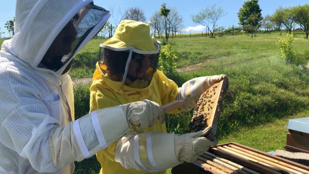 À l'école des apiculteurs