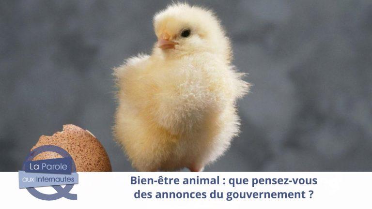 Les mesures du gouvernement pour le bien-être animal