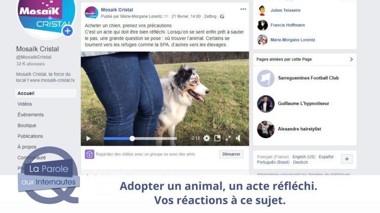 Adopter ou acheter un animal : vos réactions