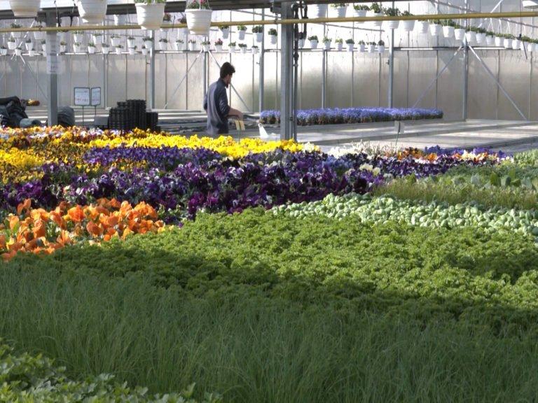 Horticulture en ligne