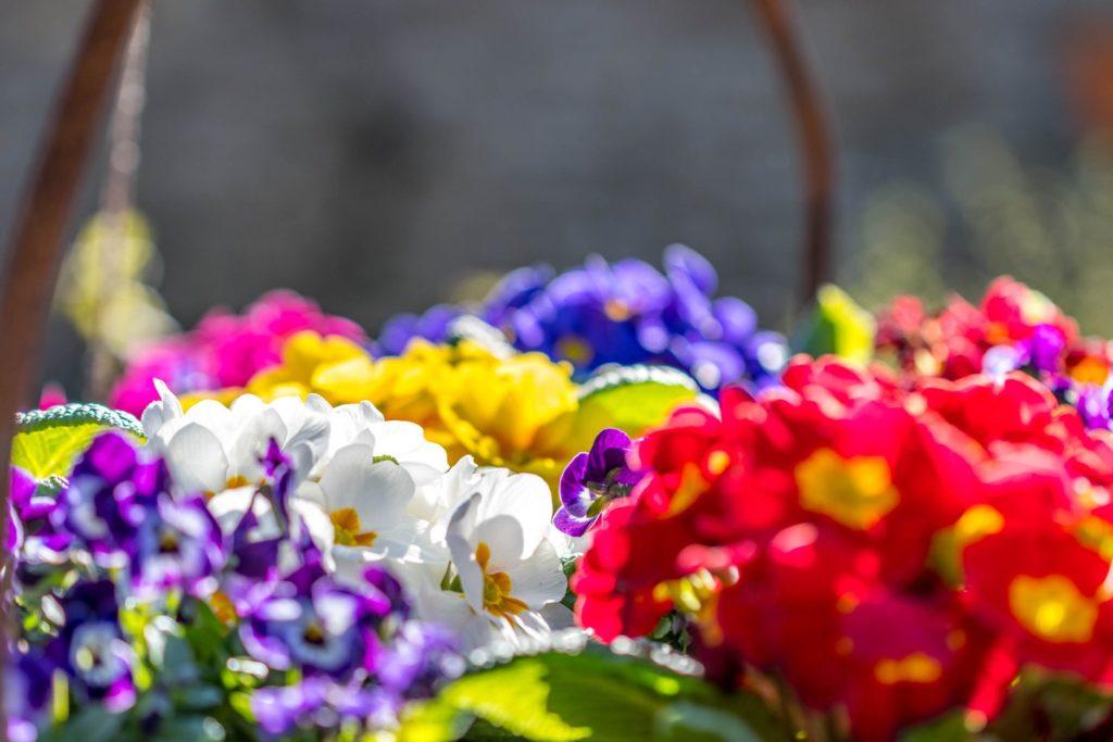 Le concours communal des maisons fleuries, c'est maintenant !