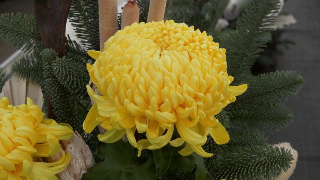 La Toussaint chez les fleuristes