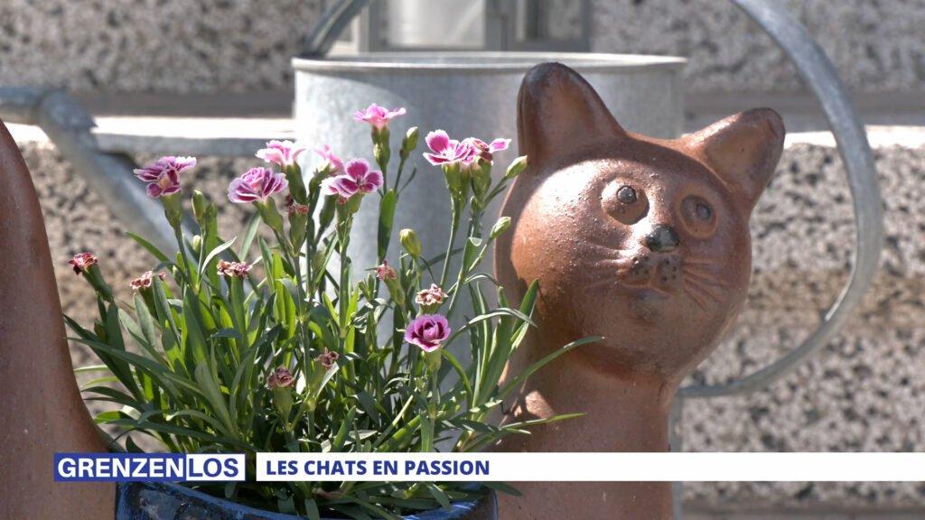 Grenzenlos: Les chats en passion